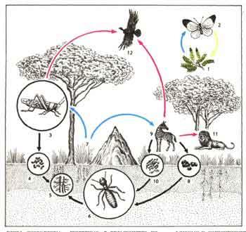 Картинки круговорот в природе животные и растения